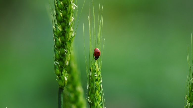 la biodiversite est source de sante